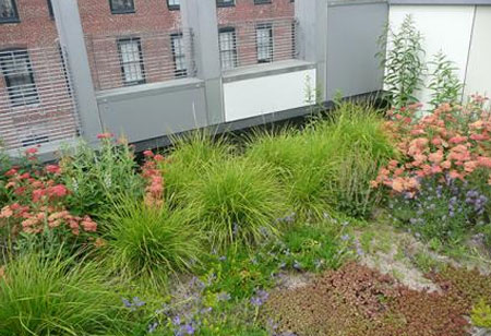 Reducing Energy Usage with Green Roofs