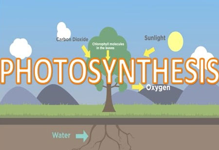 New Methods to Tweaking Photosynthesis to Boost Plant Growth